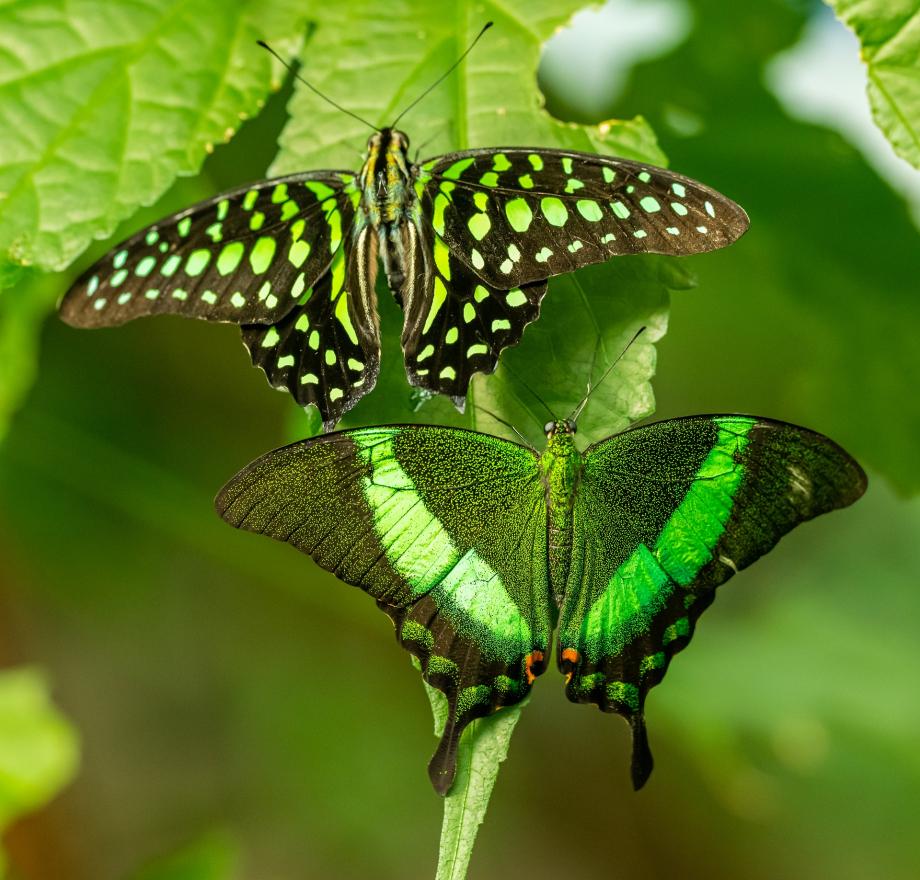 butterflies-5189791_1920