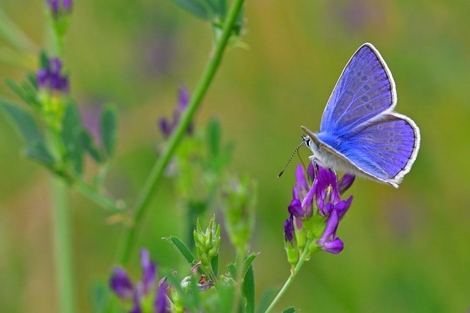 butterfly-4494568_960_720