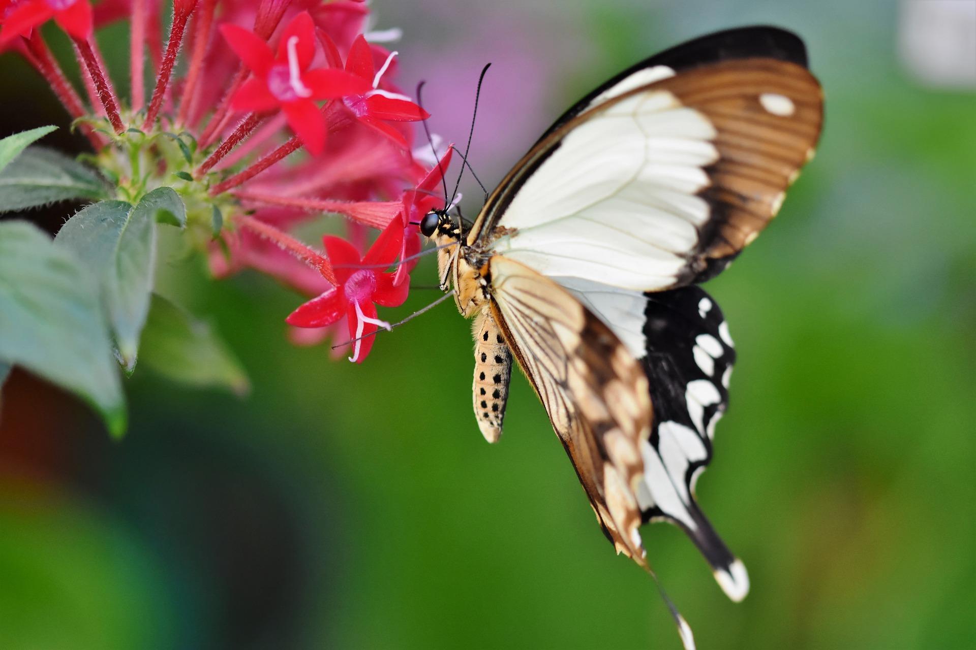 butterfly-4777883_1920