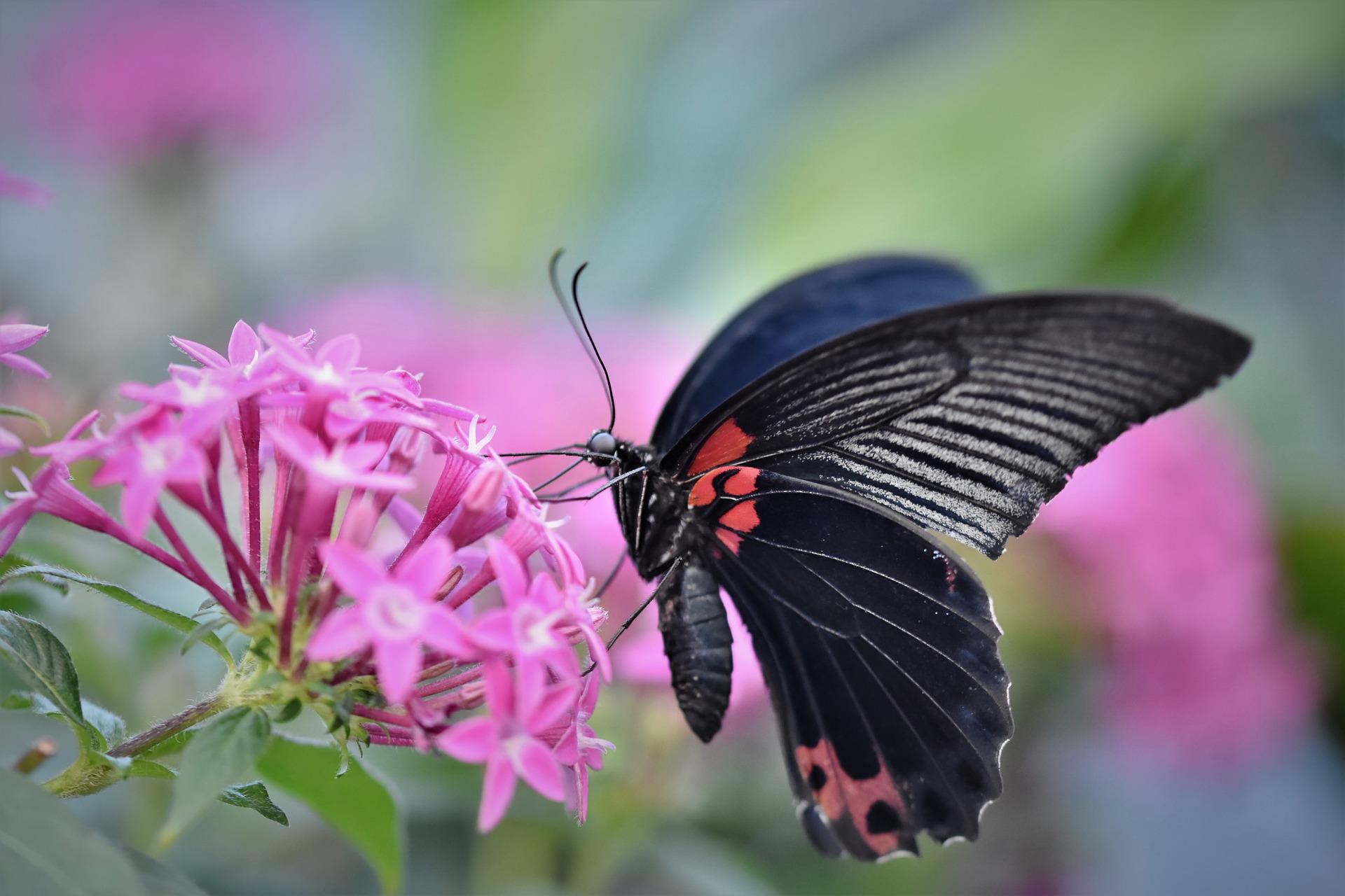 butterfly-4881977_1920