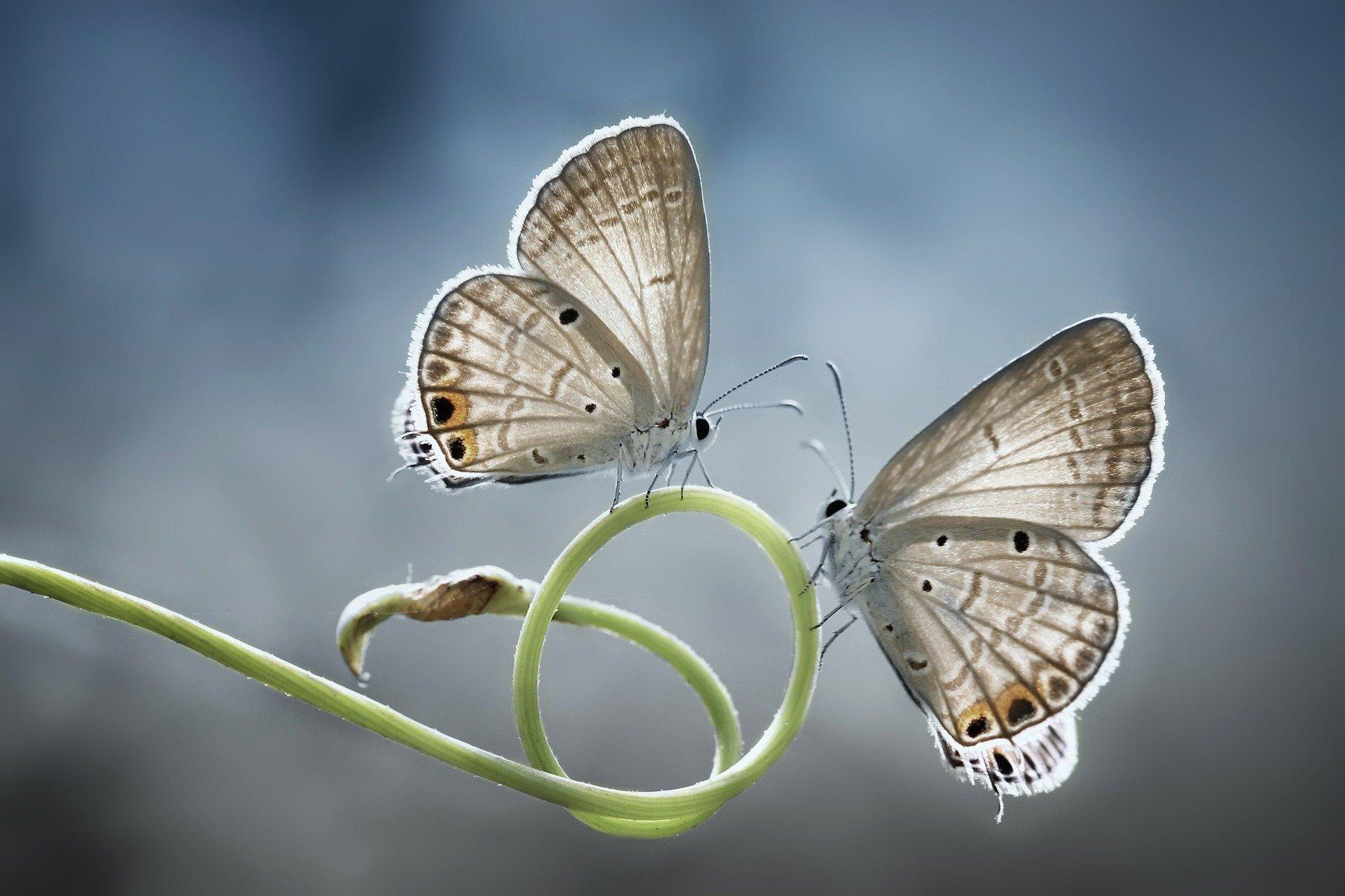 butterfly-5319328_1920