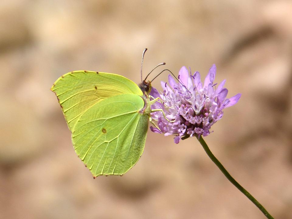 butterfly-5328151_960_720