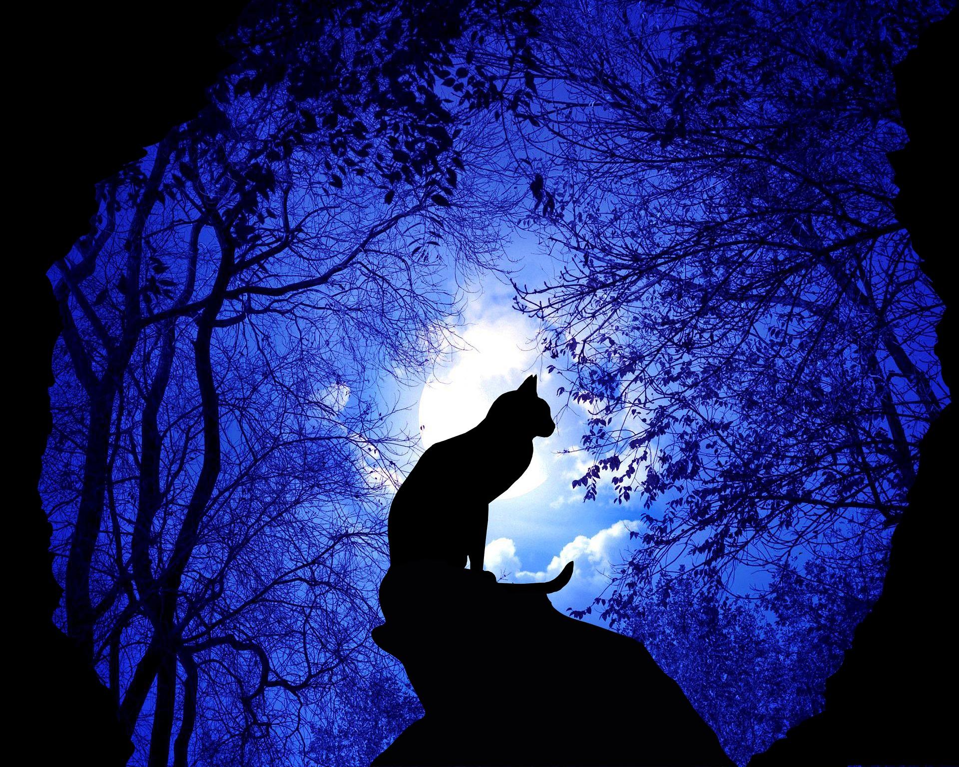 cat-4778645_1920