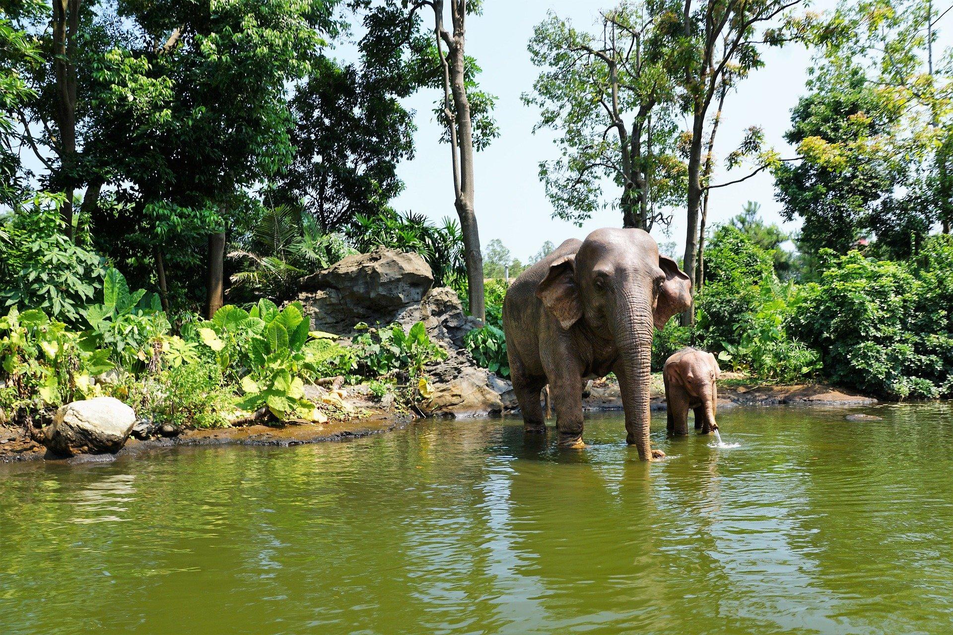 elephant-3651732_1920