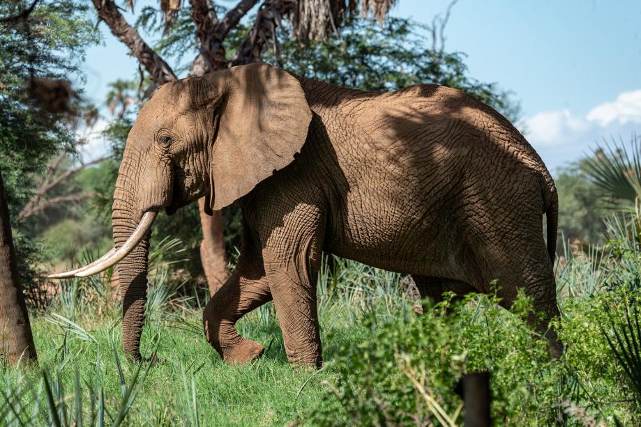 elephant-4393034_1920