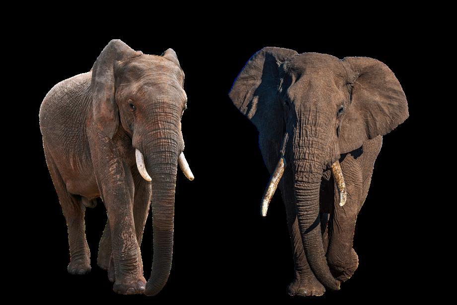 elephant-5468066_1920