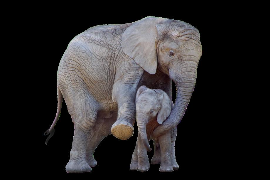 elephant-5468067_1920