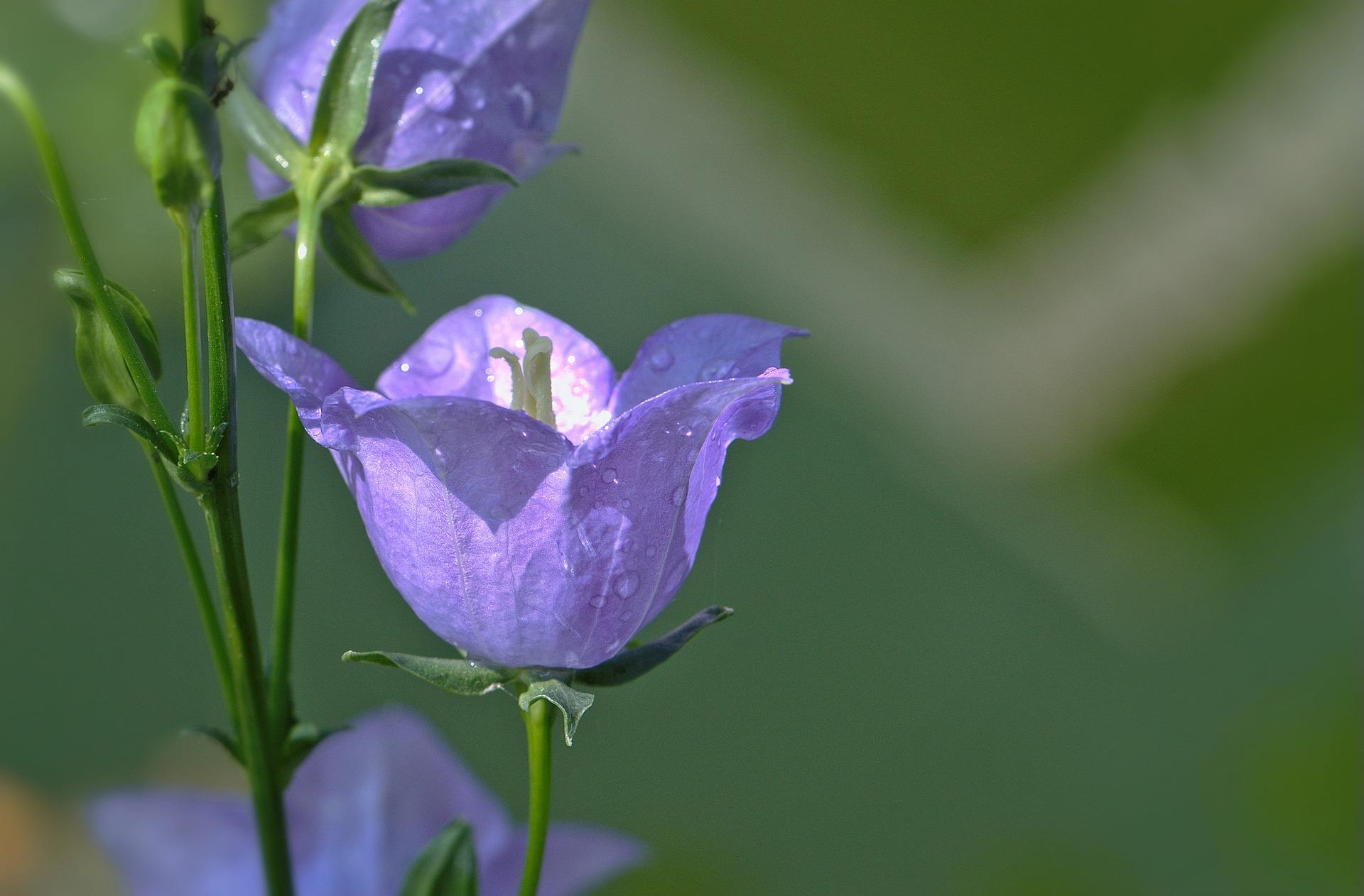 flower-5271993_1920
