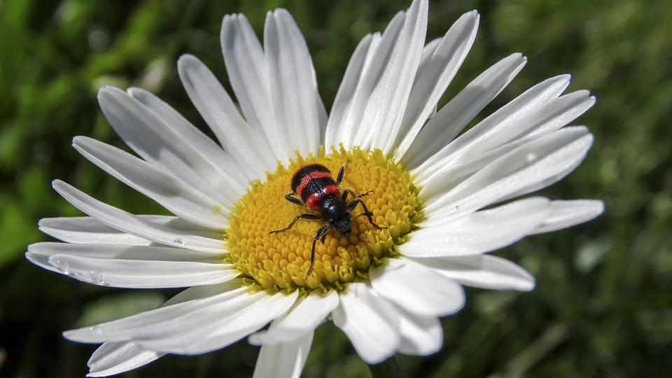 flower-5333001_960_720