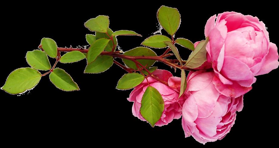 flowers-5207619_1920