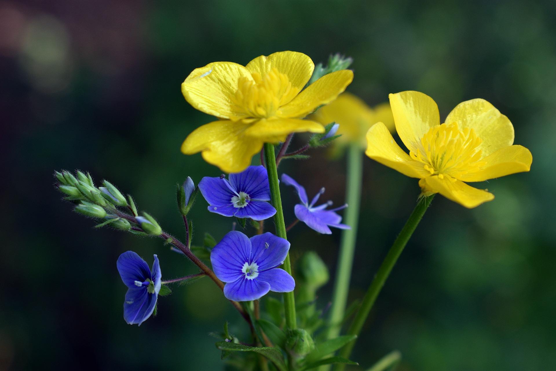 flowers-5291379_1920