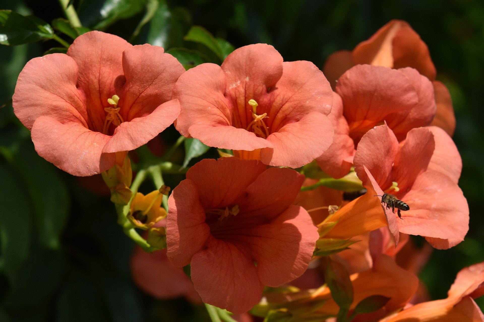 flowers-5298209_1920