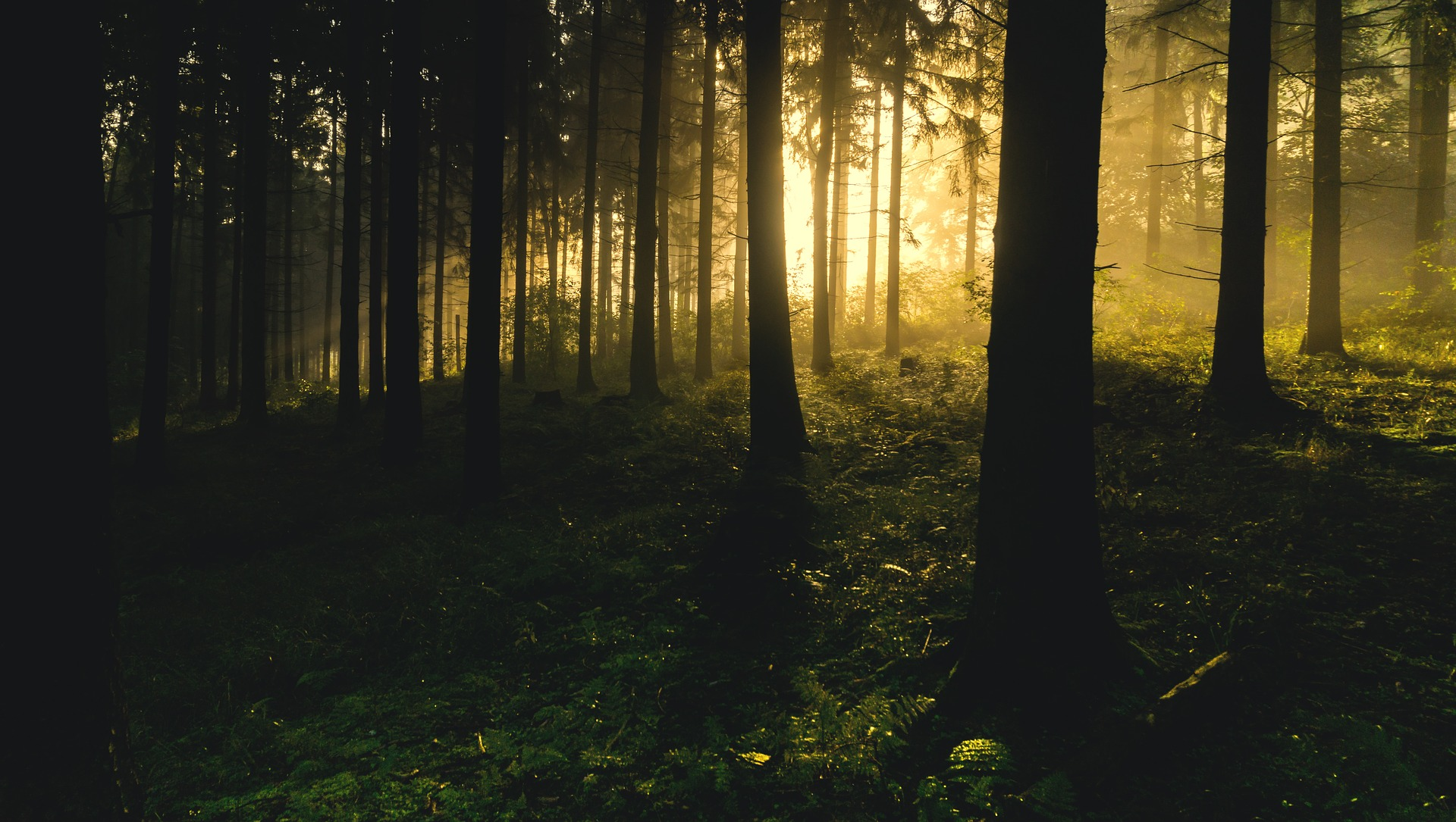 forest-1867975_1920