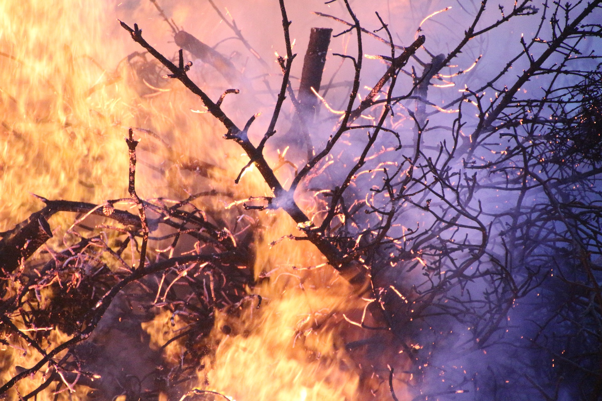 forest-fire-1669266_1920