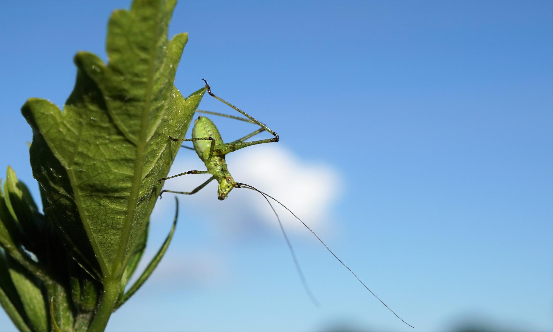 grasshopper-5335423_1920