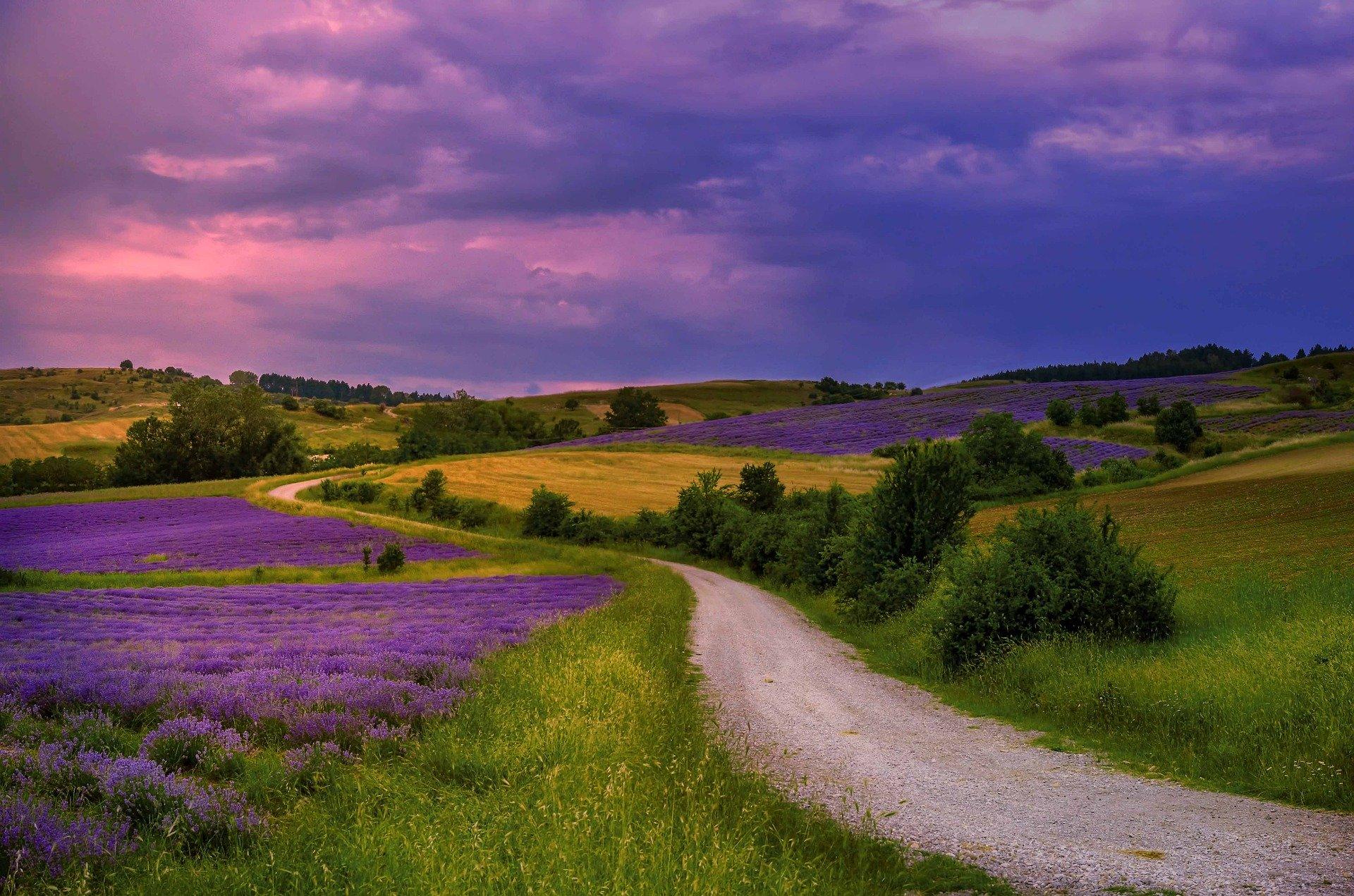 lavender-4673090_1920