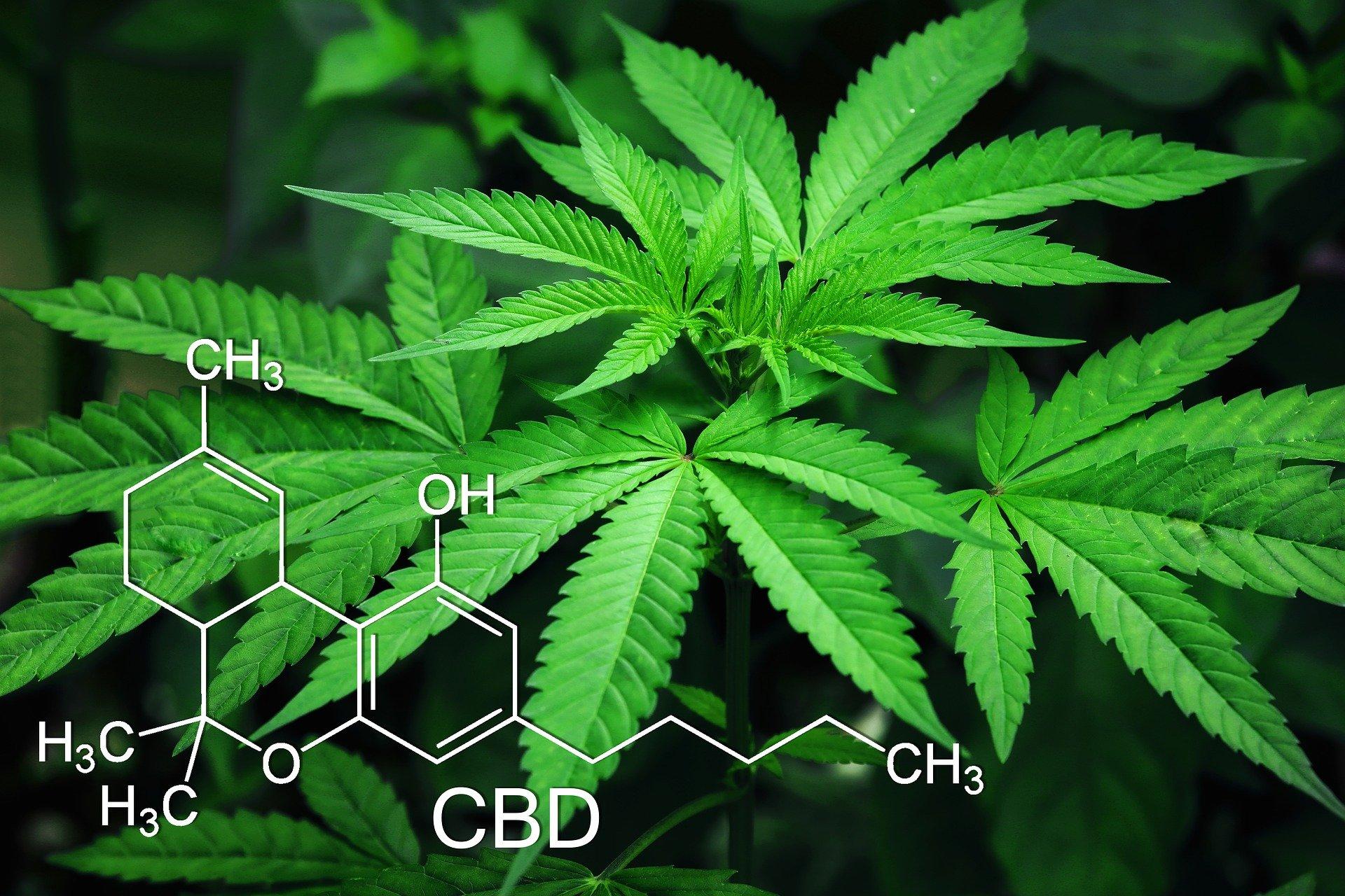 marijuana-3678222_1920