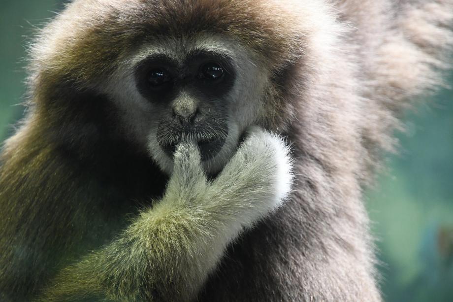 monkey-5332600_1920