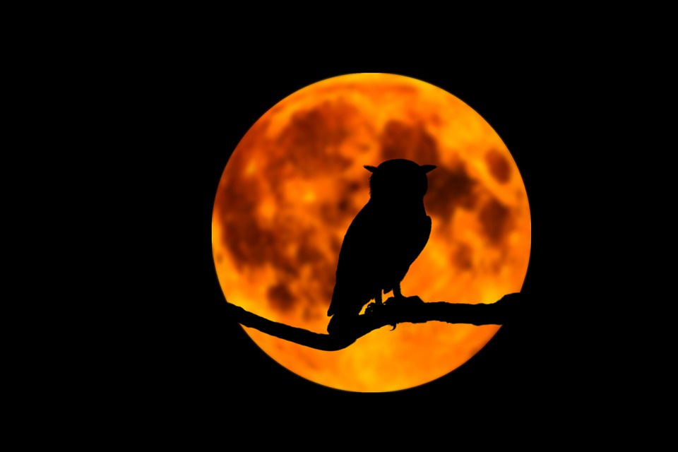 owl-5228553_960_720