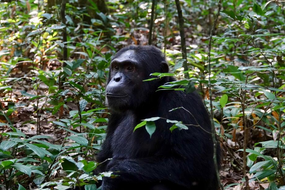 primate-3177179_1920
