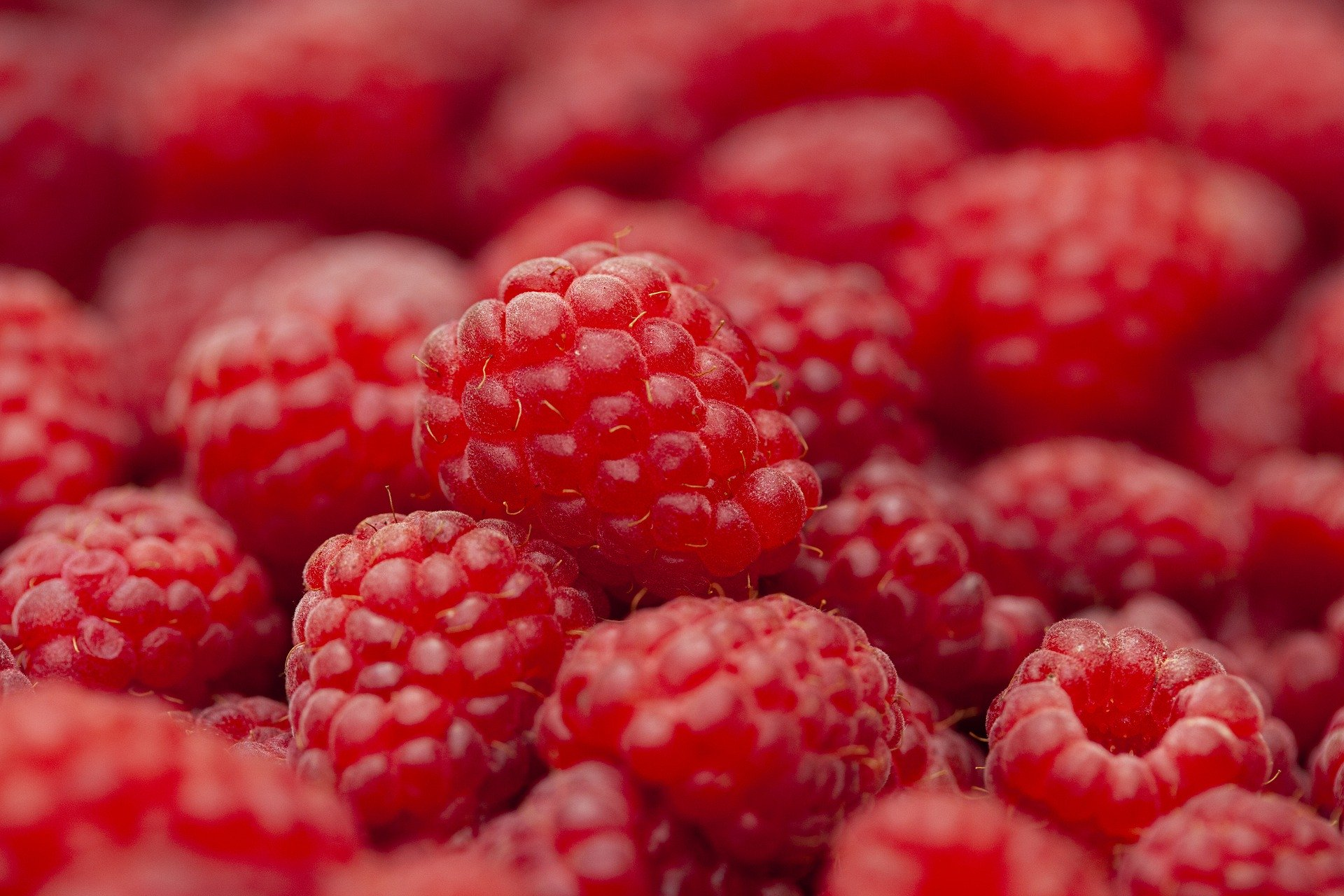 raspberry-5407356_1920