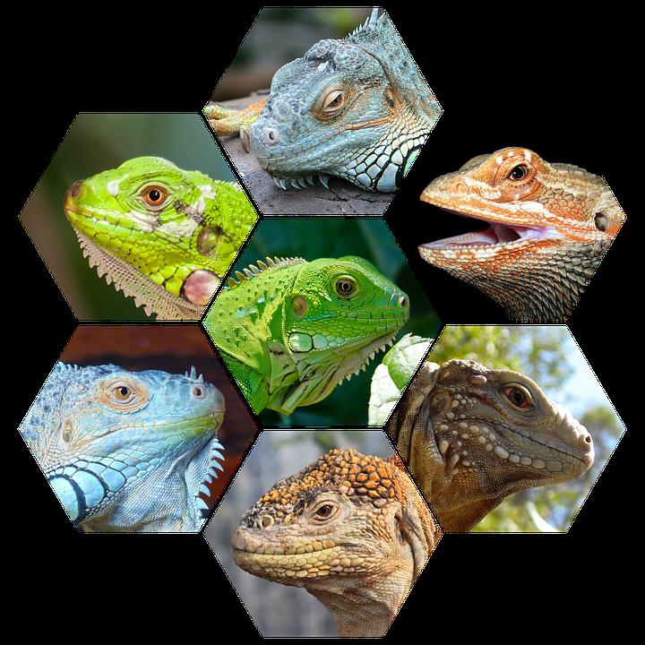 reptiles-1313128_960_720