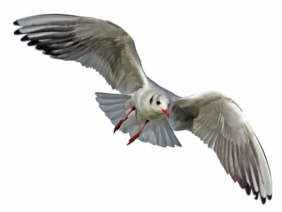 seagull-2693363_1920