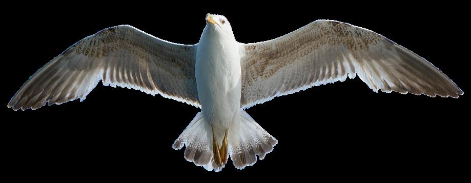 seagull-2925345_1920