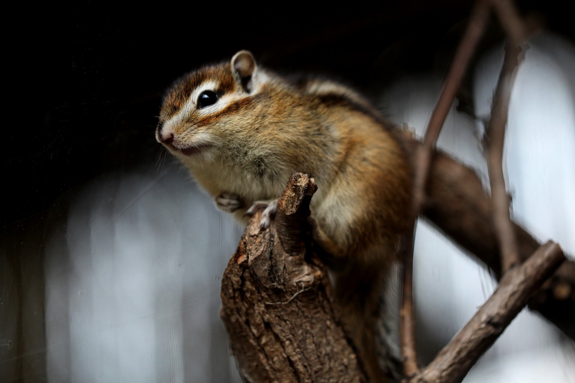 squirrel-5506514_1920