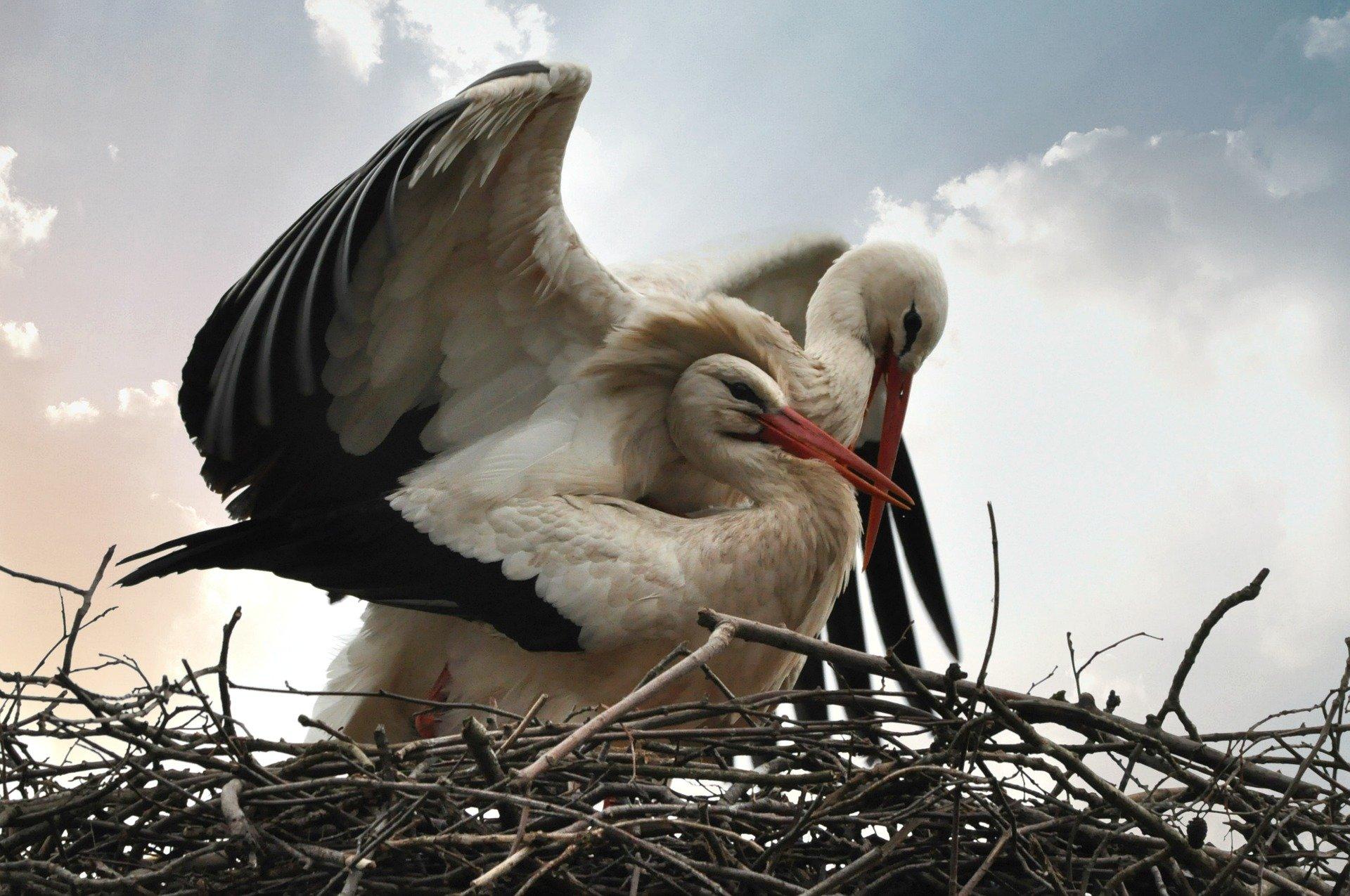 stork-4088353_1920