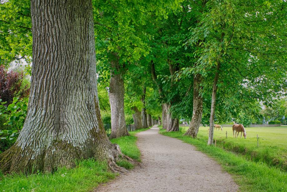 trees-5270950_1920