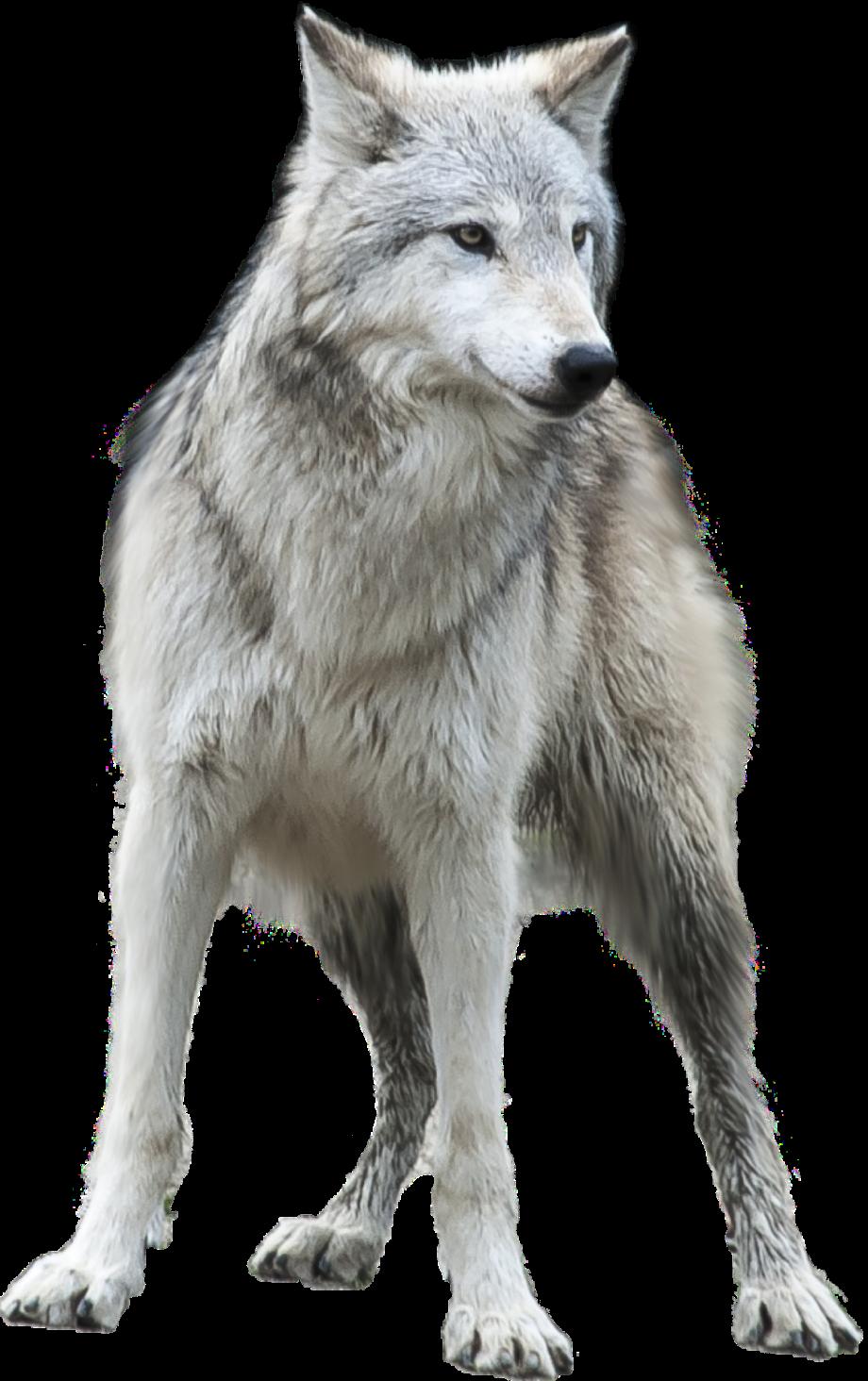 wolf-ga5f12d2fc_1920