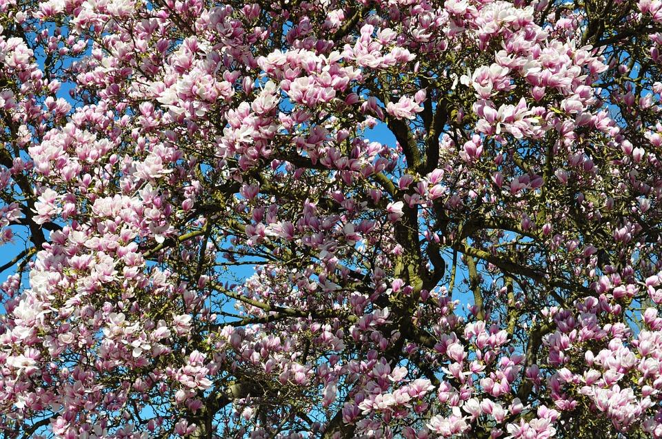 Fleurs printemps.jpg