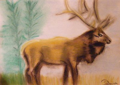 21 - Le cerf