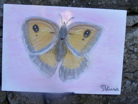 12 - le papillon