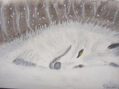98 - Le loup blanc couché dans la leige