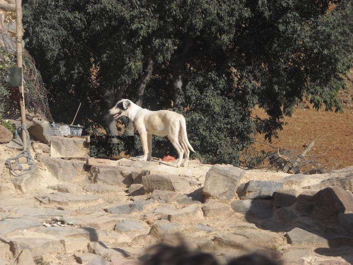 Un chien Dalmatien
