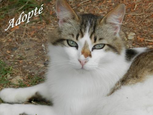 Buster Adopté.jpg