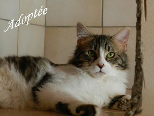 Lolita Adoptée.jpg