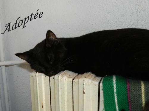 Phoebe Adoptée.jpg