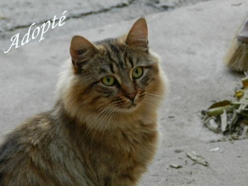 Roméo Adopté.jpg
