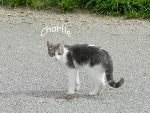 Charlie copie.jpg