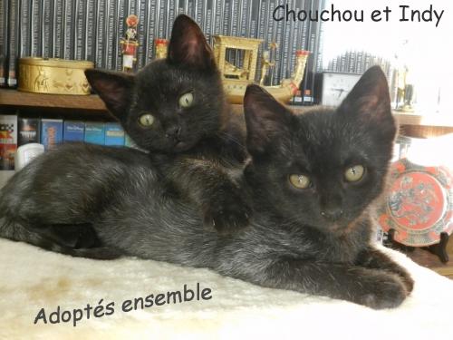 2 Chouchou et Indy copie copie.jpg