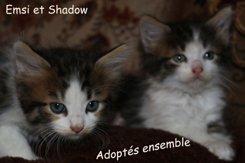 Emsi et Shadow copie.jpg