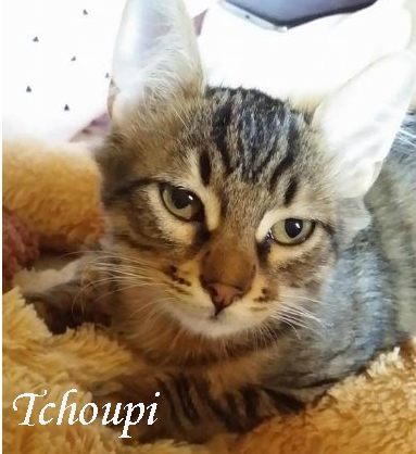 Tchoupi.jpg