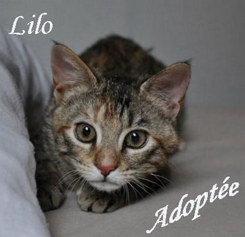 Lilo copie.jpg