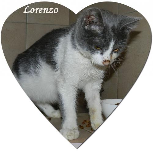 1Lorenzo.jpg