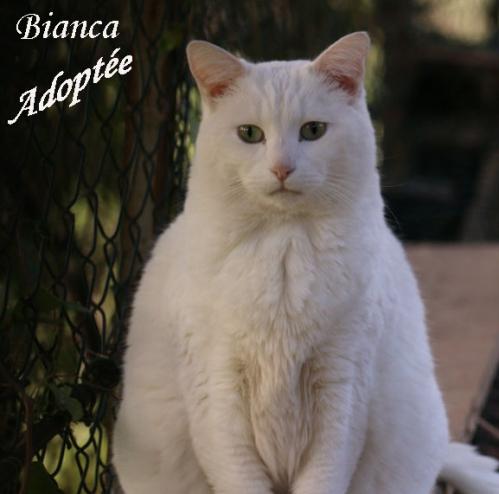 Bianca copie.jpg