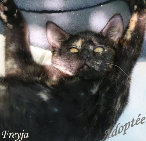 Freyja.JPG