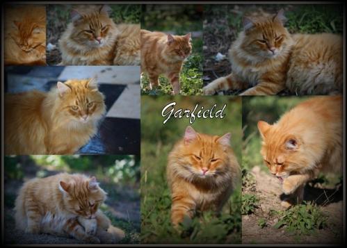 Garfield 1 pb.jpg